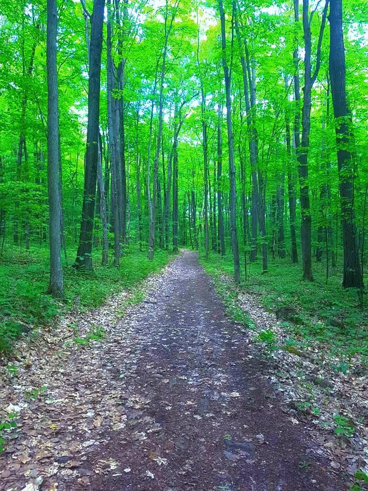 Park national d'Oka/Oka National Park (Quebec) Canada  La marche en forêt engendre une moindre production d'hormones de stress (cortisol) que la marche en zone urbaine.  Que vous soyez un débutant ou un marcheur averti, la randonnée pédestre est l'activité de plein air la plus accessible et la plus populaire.  Vous trouverez au parc national d'Oka un sentier qui saura vous plaire.