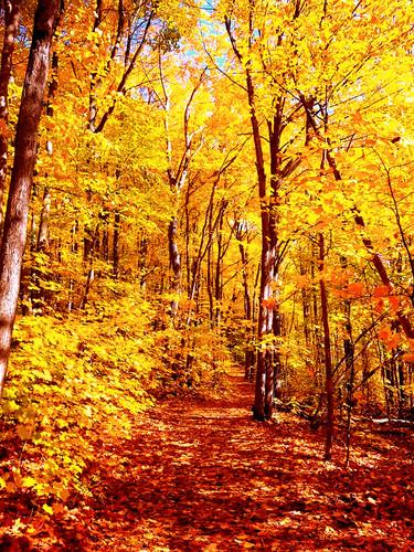 Park national d'Oka/ Oka Park national d'Oka/Oka National Park (Quebec) Canada Calme et quiétude seront servis avec le sentier du Sommet (boucle de 6,8 km) croisant un ruisseau au bas et en haut de la colline.  Il se prend facilement par les sentiers du Mont Calvaire.