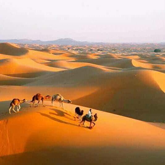 DÉSERT DU SAHARA MAROCAIN/Morocco Sahara Desert  Le désert du Sahara est pour les amoureux de la randonnée extrême ou pour les amateurs de décors naturels sublimes.