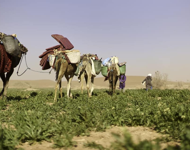 DÉSERT DU SAHARA MAROCAIN/Morocco Sahara Desert  La découverte du Sahara se fait avec la vallée du Drâa. Ce fleuve irrigue des palmeraies et des oasis.  Les oasis font partie des richesses naturelles du Maroc.  Dailleurs, la région de Tafilalet, au Sud du pays, abrite la plus grande oasis au monde.