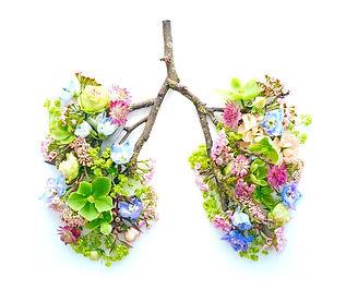 pulmones opt.jpg