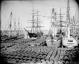New Bedford whaling, black whalers, African-American Sailors, Whaling ship Industry, how whale oil was made, price of whale oil, sperm whales