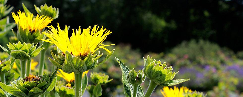 Herbal-healing.jpg