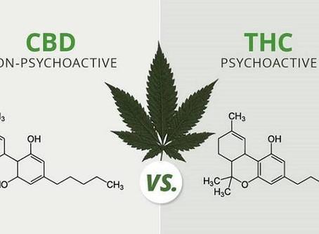 大麻二酚(CBD)和 四氢大麻酚(THC)的区别