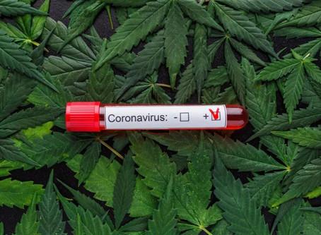最新发现:CBD可降低新型冠状病毒70%的感染率!