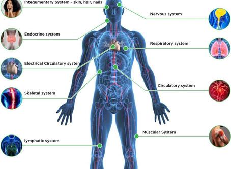 ECS内源性大麻素系统:影响免疫系统的重要角色