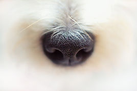 nose-4420535_1920.jpg