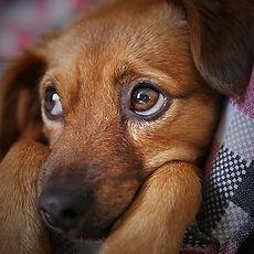 dog with anxiety.jpg