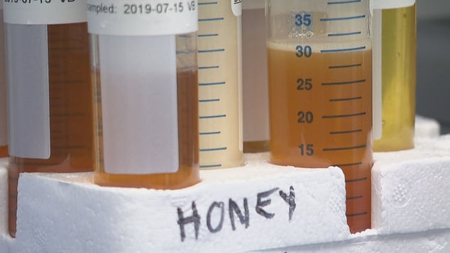 Honey samples.jpg
