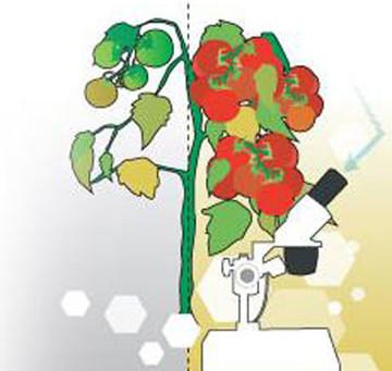 "Demystifying Food Marketing Terms…like ""Organic"""