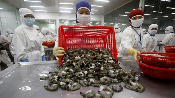 Canada imports about $700 million in shrimp every year, with much of it coming from India, Vietnam, China and Thailand. (Reuters)
