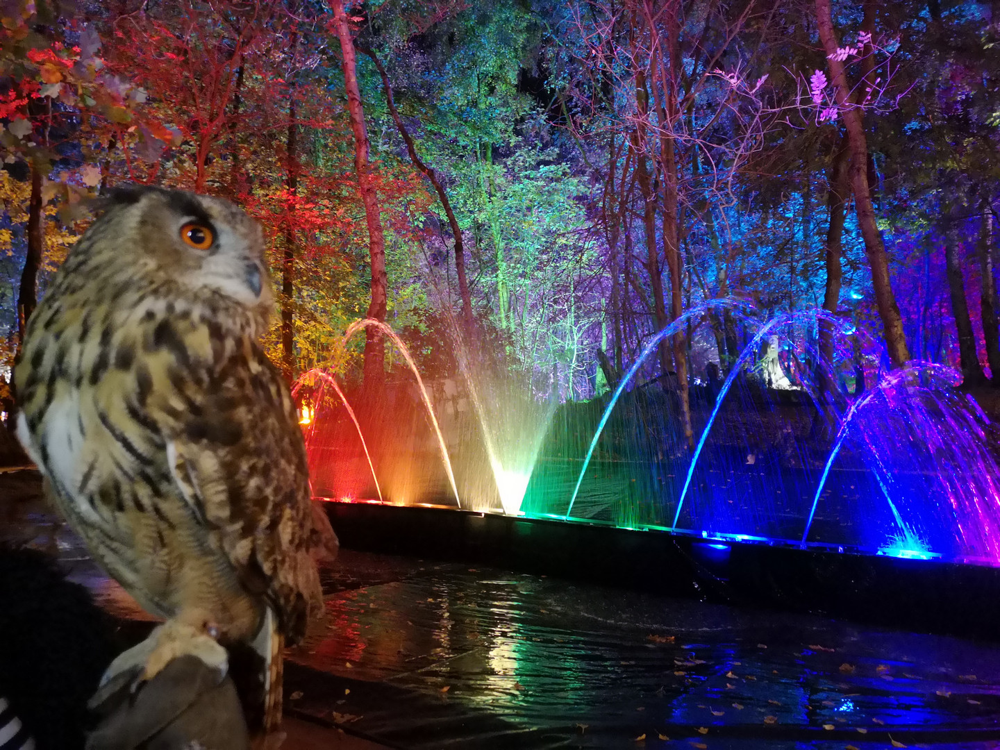 Walter The Eagle Owl