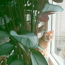 Onze kat Abby vind het maar raar dat we