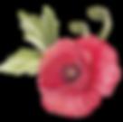 Poppy avec feuilles