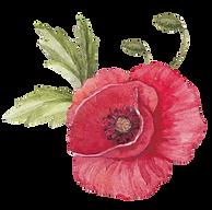 Poppy mit Blättern