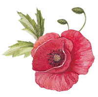 Poppy with Leaves