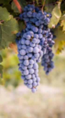 Varietal_Carmenere crop.jpg