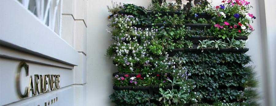 Green Walls / Muro Verde