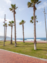 Beach Palms 01_07_MG_1830.jpg
