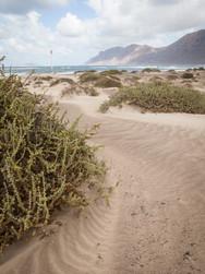 Beach 03_02_MG_3342.jpg