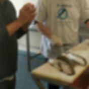 fish-filet.jpg