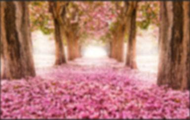 7x5FT-Rosa-Flores-rvore-Ch-o-Caminho-T-n