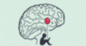 amigdala-cerebral-768x419.jpg