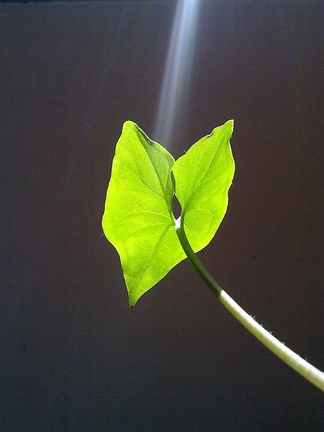 leaf-57126_640.jpg