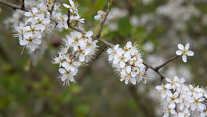 Seasonal Cycles - Spring