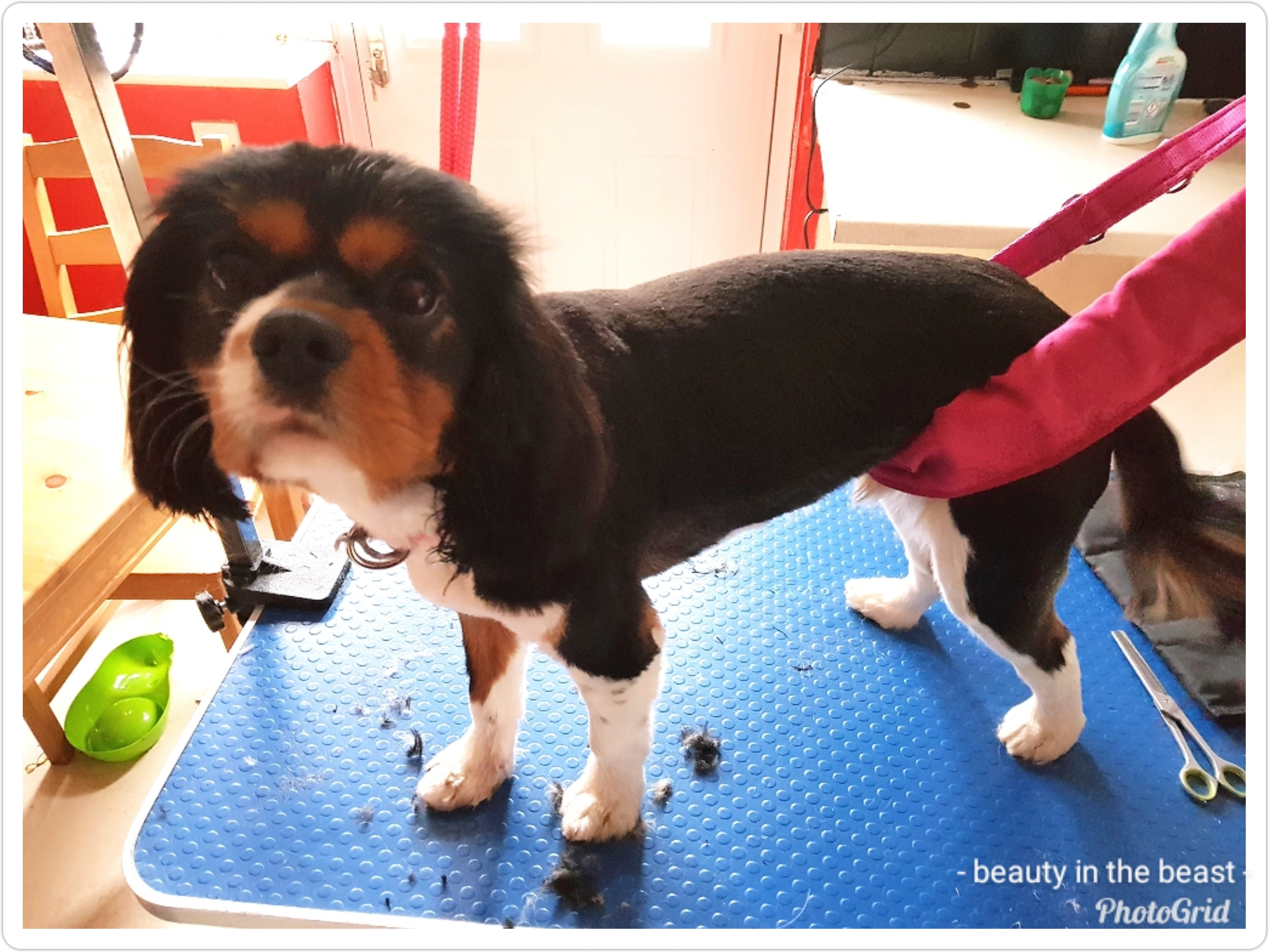 mobile dog groomer middleton heywood oldham moston tameside manchester