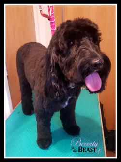 mobile dog groomer middleton heywood oldham moston tameside manchester