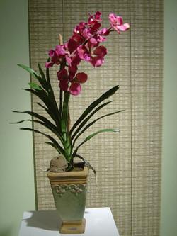 orchid+4.jpg