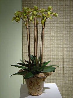 orchid+6.jpg