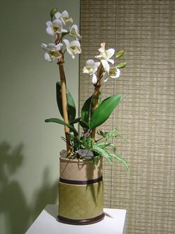 orchid+8.jpg