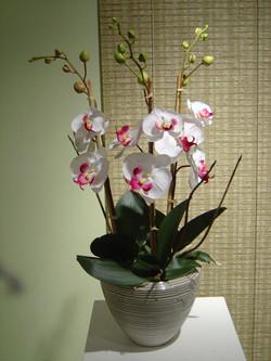 orchid+5.jpg