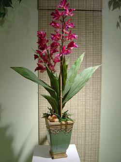 orchid+7.jpg