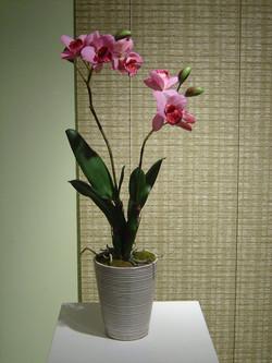 orchid+3.jpg