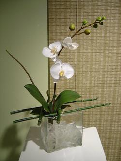 orchid+9.jpg