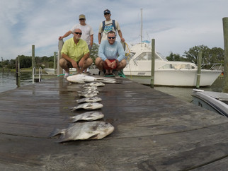 Spadefish and Cobia report