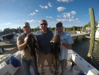 ROUGH! Cobia, Cobia