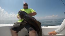 Stellar Cobia fishing #studbolt
