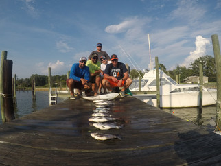 Chesapeake Bay recent Cobia and Spadefish reports #SaltTreatedFishing