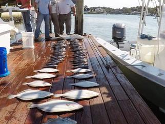 Big Cobia,Flounder, Seabass!