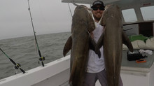 Just WOW! Amazing class of Cobia! #BigGirls