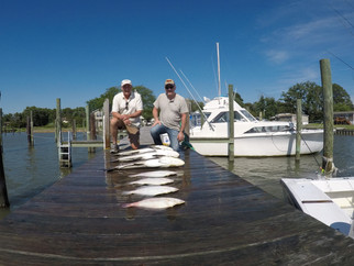 Flounder and Big Cobia Chesapeake Bay fishing report #fishfry