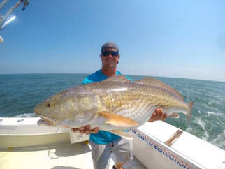 Big Red Drum and Cobia