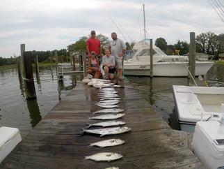 Amazing fishing! Spanish Mackerel and Cobia #meathaul #salttreated