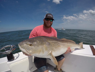 Couldn't ask for a better start! Big Red Drum & Cobia