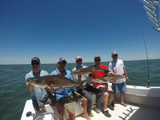 Virginia Cobia Fishing Report #wideopen