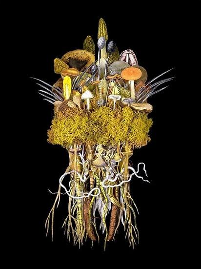 """""""Botanicals: Sunrise Troupe"""" By Jana Nicole"""